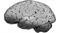 Zbunjenost, napadaji, udari: Kako covid-19 utječe na mozak? | Domoljubni portal CM | Zdravlje