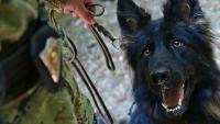 Završen tečaj za vodiče službenih pasa čuvarske namjene u Pukovniji vojne policije | Domoljubni portal CM | Press